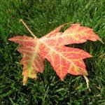 Autumn Task: Change Smoke Alarm Batteries