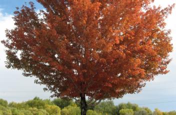 Autumn-Rapport