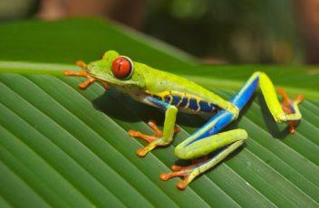 frog-legs-batteries